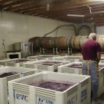 Harvest-Grapes-Fermenting
